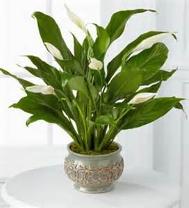 indoor potted plants indoor gardening potted plant ideas interior design inspiration