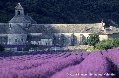 Lavendel In Der Provence Informationen Bl 252 Tezeit
