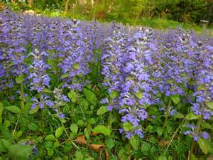 ground cover advice needed flowers lawn growing ground covers garden trees grass lawn