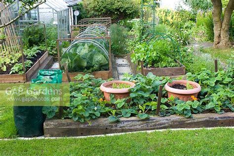 Gap Gardens Vegetable Plot In Cottage Garden Image No Cottage Vegetable Garden