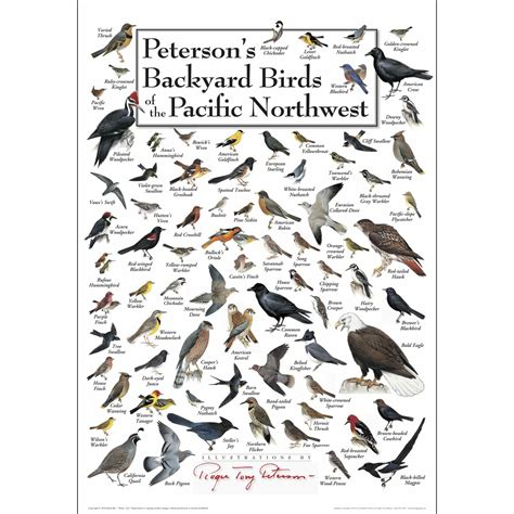 peterson s backyard birds of the pacific nw poster