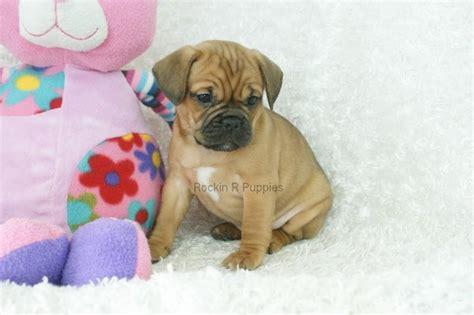 pug breeders nyc pug breeders nj pkhowto