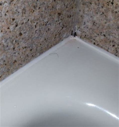 pubic hair barettes pubic hair left in tub picture of holiday inn express