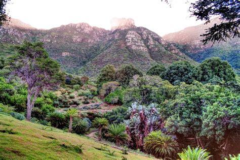 Kirstenbosch National Botanical Garden Cape Town Panoramio Photo Of Kirstenbosch National Botanical Garden Cape Town Western Cape South Africa
