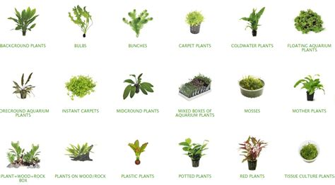 tropical water plants the of aquatic plants