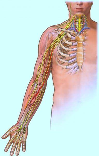 dolore braccio sinistro interno dolore al braccio sinistro e destro dopo vaccino cause e