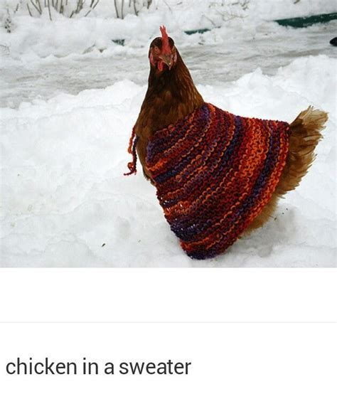 chicken slippers pin by cheri lowery on another lol hahaha