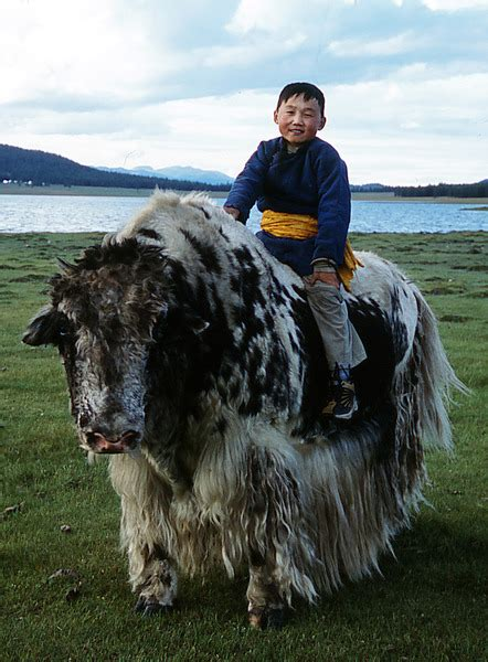 yak decke lixfeld yak decke dunkel braun avocadostore