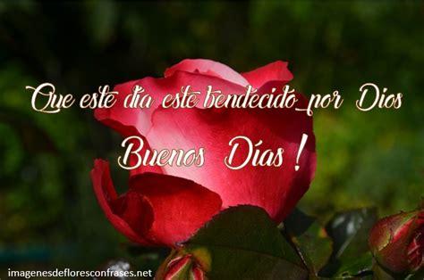 imagenes buenos dias con rosas im 225 genes de rosas para desear buenos d 237 as rosas con frases