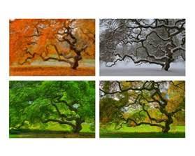 four seasons landscaping 4x6 print set four seasons landscape photography tree of