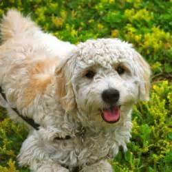 hypoallergenic dog and cat breeds popsugar pets