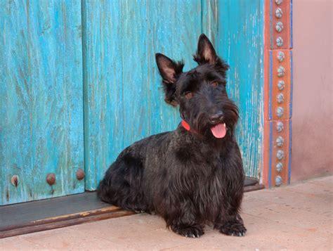 piu al mondo i 10 cagnolini di piccola taglia pi 249 teneri al mondo