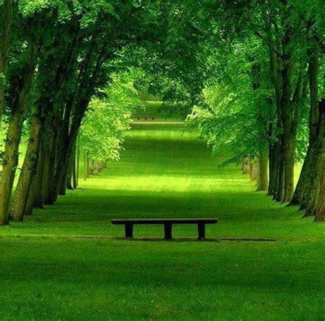 green park bench green park bench trees places pinterest