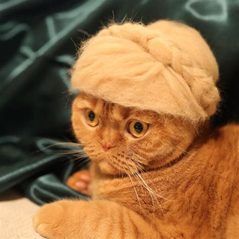 cat hair cat hair made out of their own hair design swan