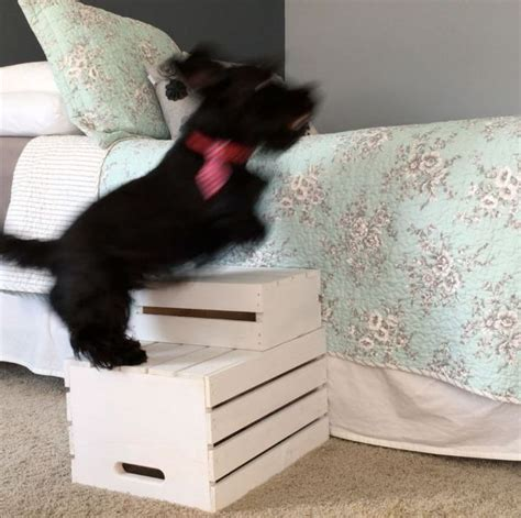 puppy stairs for bed 25 best ideas about stairs on pet stairs steps and step stool