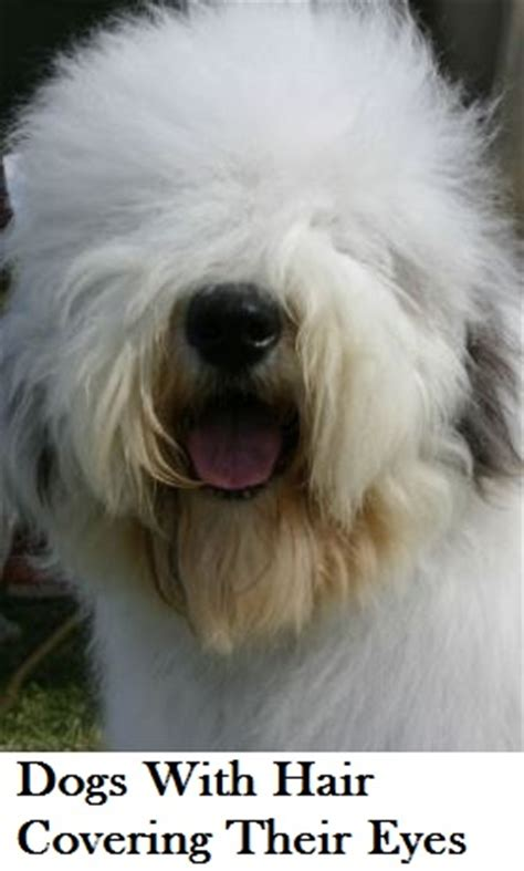 dogs with hair breeds with hair daily discoveries