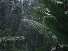 Kitchen Island With Leaf biodiversity amp conservation biology