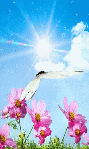 imagenes gif bonitas para celular imagenes bonitas con movimiento de flores con una mariposa