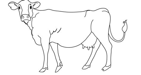 cow template cow template www pixshark images galleries with a
