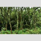 Mountain Gorilla Habitat   1280 x 852 jpeg 1121kB