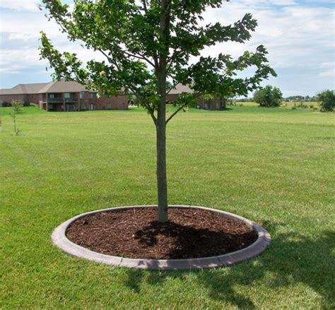landscape around trees tree landscaping ideas newsonair org