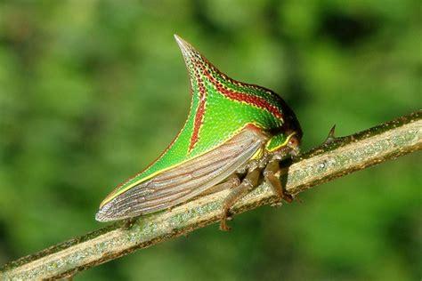 imagenes de insectos verdes especies a 233 reas aves insectos y dem 225 s exoticoszwa