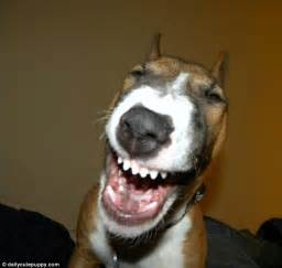 can dogs laugh laughing dogs the dogs who just to a laugh daily mail