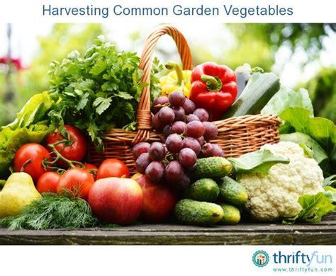 harvesting common garden vegetables thriftyfun