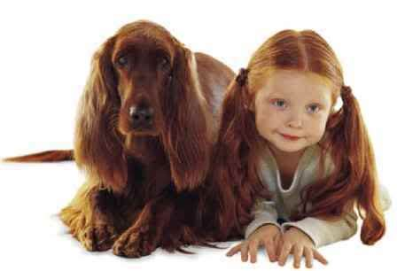 who look like their dogs who look like their dogs for the of the