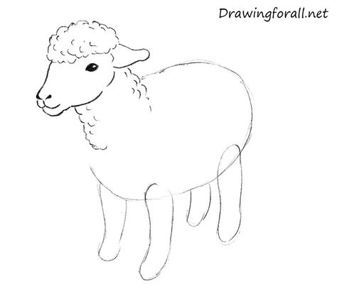 how to a sheep the gallery for gt how to draw a goat step by step for