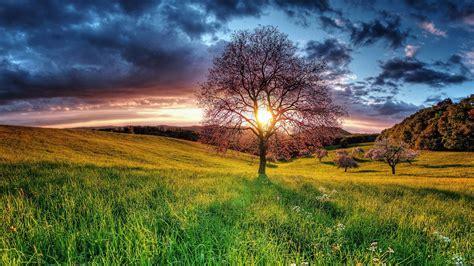 full hd wallpaper in desktop natural landscape sunset field sky tree full hd desktop