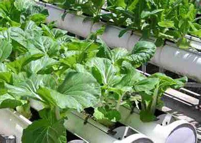 Colture Idroponiche In Casa by Idroponica Come Coltivare In Casa Senza Terra Greenme