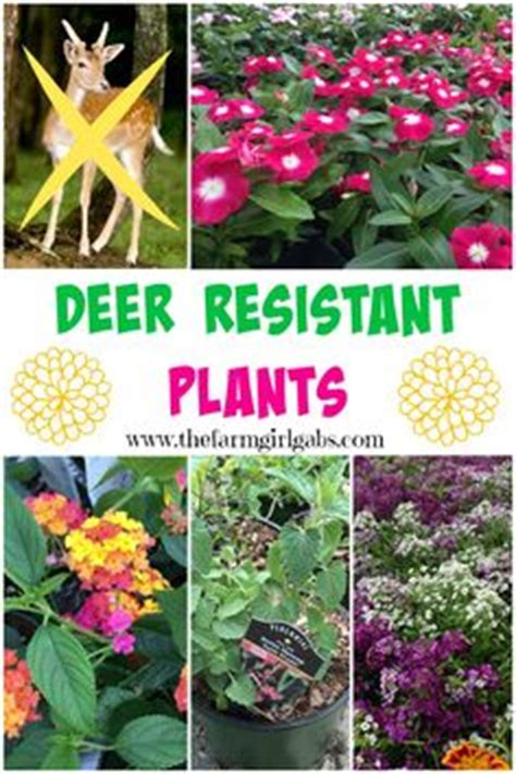 pin by mike wilczynski on deer resistant plants pinterest consider deer resistant plants deer resistant plants