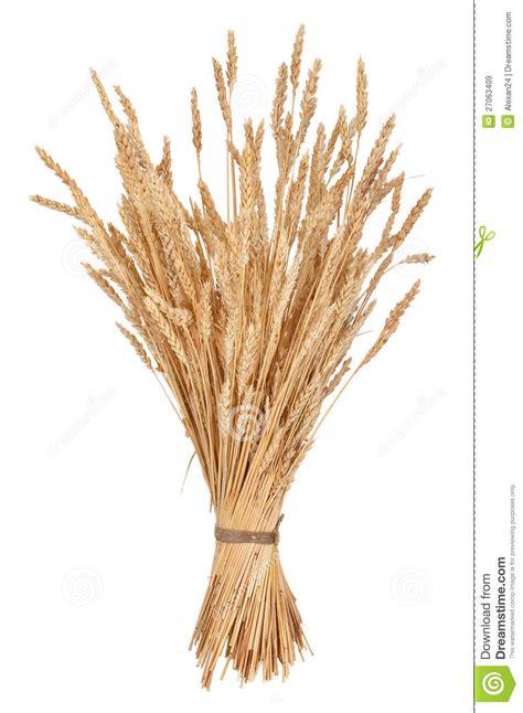 wheat clip grain clipart sheaf wheat pencil and in color grain