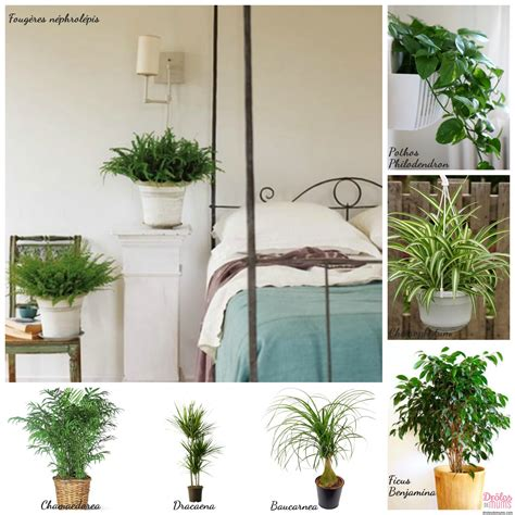 plante verte dans une chambre à coucher quelles plantes choisir pour d 233 polluer ma maison et les