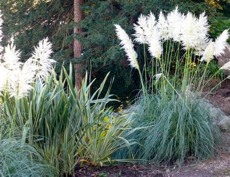 pas grass sign swinging gramin 233 es ornementales au jardin 100 id 233 es d am 233 nagement