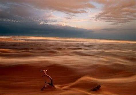 fiore deserto deserto appare lo scenario senza il rinverdire di un fiore