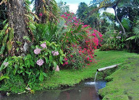 Gardenia Outdoor Gardenia Garden Photo Gallery Page