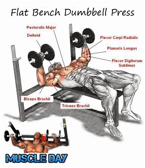 best bench press workout 17 best images about chest and tri day on pinterest