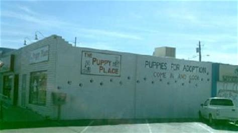 the puppy place tucson puppy place tucson az 85711 business listings directory powered by homestead