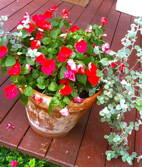 23 best images about gardening ideas on pinterest