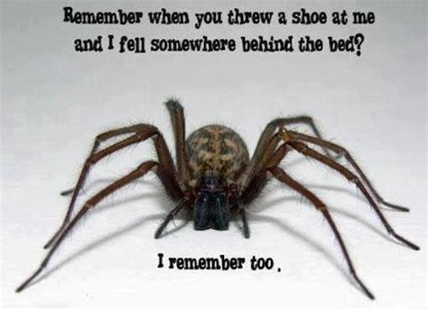 Scary Spider Meme - scary spider remembers