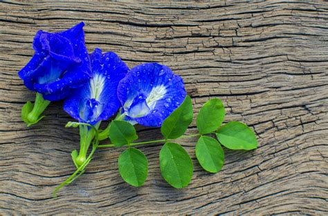 Butterfly Pea Tea 1 butterfly pea tea color changing blue tea asian
