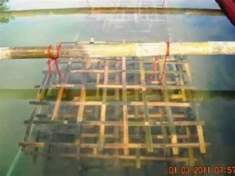 Pakan Untuk Udang Galah kolam terpal untuk budidaya udang galah pin bb 74b2bdd0