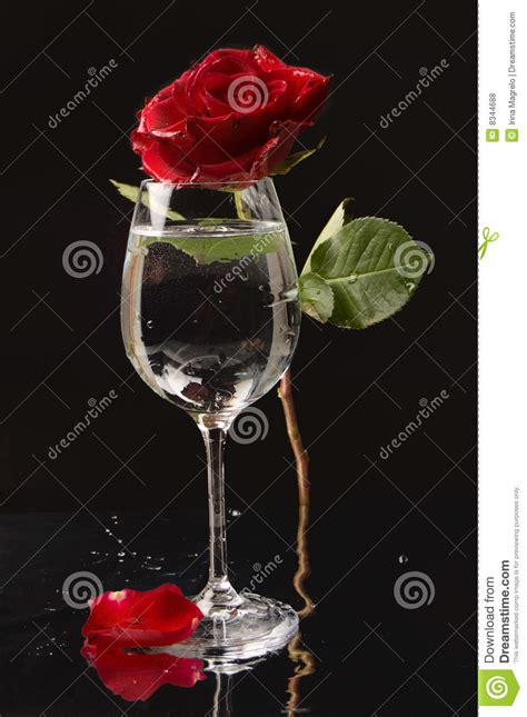 rose in glass rose and wine glass of water royalty free stock photos