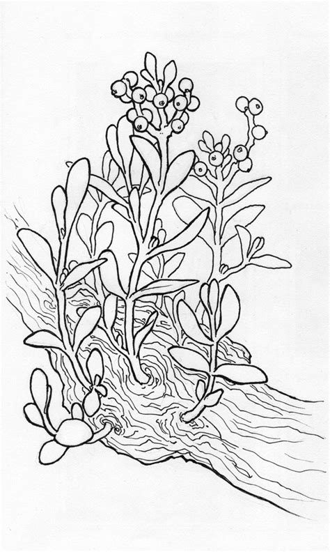 Free Coloring Pages Of Holly Plant Mistletoe Coloring Page