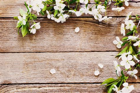Wedding Background Rustic by Rustic Wedding Background Www Imgkid The Image Kid