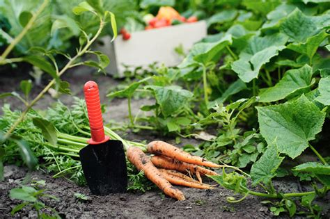 Fall Vegetable Gardening Fall Vegetable Garden Vegetables To Grow During Fall