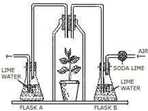 design an experiment to determine if plants respire icse guess gt icse papers gt question bank gt class x gt 2007