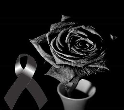 imagenes rosas blancas de luto rosas blancas de luto imagenes de luto